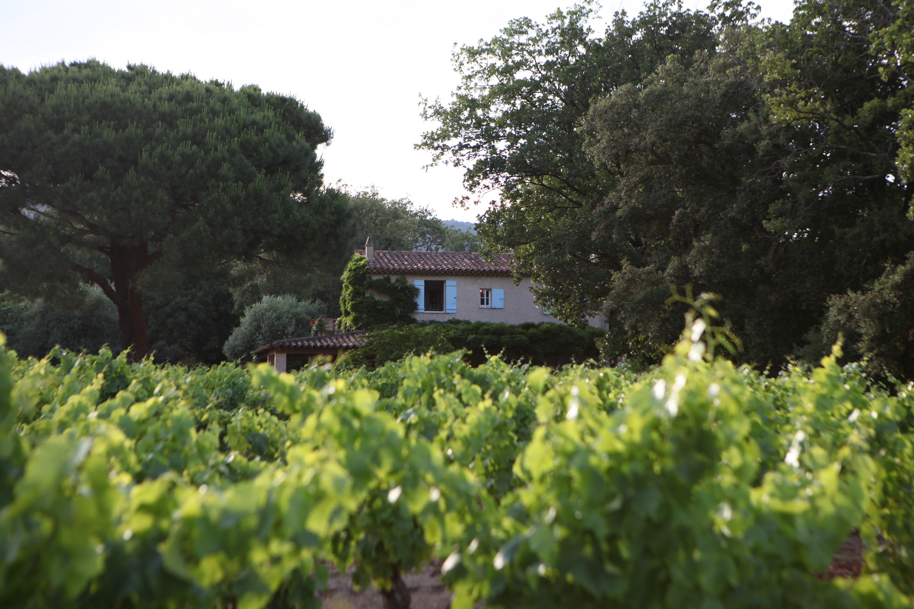 House-from-vines